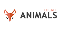 animals - How to Celebrate World Animal Day Every Day