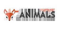 animals - Animals Life